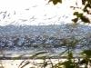 Ptactwo Doliny Baryczy
